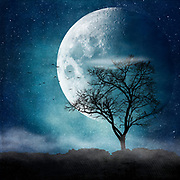 Tree Silhouette with birds against a big full moon - photo manipulation