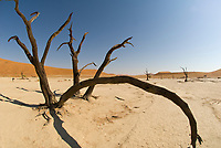 Dead Vlei (Clay Pan), Sossusvlei Sand Dunes (highest dunes in the world), Namib Desert, Namib-Naukluft National Park, Namibia