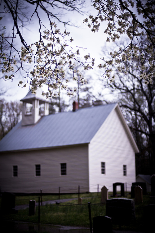 Blooming Dogwood and Primitive Baptist Church