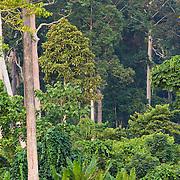 Tambling Nature Reserve