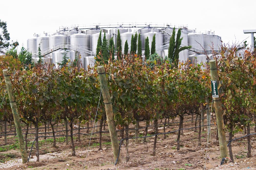 Fermentation tanks. Vineyard. Vines with black irrigation tubing. Bacalhoa Vinhos, Azeitao, Portugal
