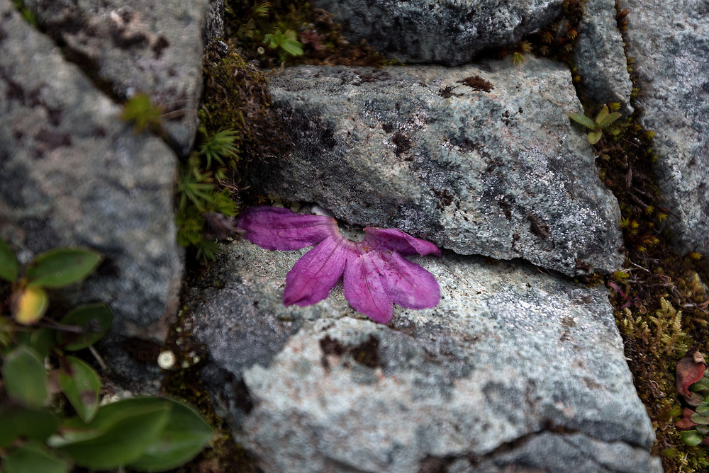 A dropped flower signals the end of the short Alaskan summer.