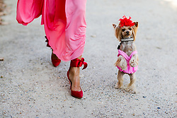 Street style, dog Little Lola Sunshine arriving at Paco Rabanne spring summer 2019 ready-to-wear show, held at Grand Palais, in Paris, France, on September 27th, 2018. Photo by Marie-Paola Bertrand-Hillion/ABACAPRESS.COM