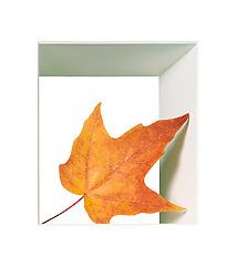 fall or Autumn leaf in white box frame