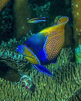 Raja Ampat, Triton Bay and FakFak in Indonesia (Dec. 2013). West Papua. Marine Life.