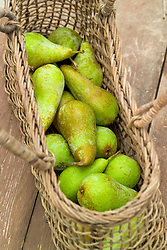 Pear 'Concorde'  in a woven basket - Pyrus.