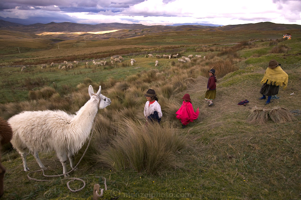 Girls tending to alpacas and sheep grazing on the altiplano grasslands near Simiatug, Ecuador, at about 9,000 feet elevation (3,000 meters). (Supporting image from the project Hungry Planet: What the World Eats.)