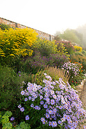 Asters and Solidago 'Golden Wings' in the herbaceous border at Waterperry Gardens, Waterperry, Wheatley, Oxfordshire
