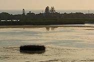 Reed island in Buena Vista Lagoon at sunset, Carlsbad, San Diego, California