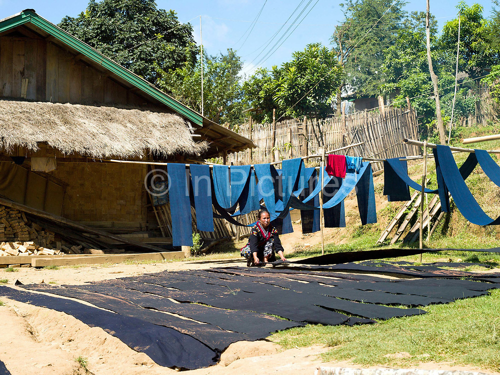 Meuay, a Iu Mien (Yao) ethnic minority woman laying cotton fabric dyed with indigo dye out in the sun to dry, Ban Hom Phan, Houaphan province, Lao PDR. Meuay buys the cotton fabric from a nearby Tai Deng village and after dyeing the fabric many times to build up the colour to a dark blue/black she sells to local Iu Mien women to make their traditional clothing. One of the most ethnically diverse countries in Southeast Asia, Laos has 49 officially recognised ethnic groups although there are many more self-identified and sub groups. These groups are distinguished by their own customs, beliefs and rituals.