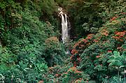 Rainforest, Waterfall, Hamakua Coast, Island of Hawaii, Hawaii, USA<br />