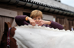 © Licensed to London News Pictures.14/07/15<br /> Harrogate, UK. <br /> <br /> A woman applies the finishing touches as she prepares her horse on the opening day of the Great Yorkshire Show.  <br /> <br /> England's premier agricultural show opened it's gates today for the start of three days of showcasing the best in British farming and the countryside.<br /> <br /> The event, which attracts over 130,000 visitors each year displays the cream of the country's livestock and offers numerous displays and events giving the chance for visitors to see many different countryside activities.<br /> <br /> Photo credit : Ian Forsyth/LNP