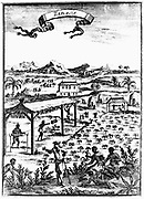 Cultivating and curing tobacco in West Indies using slave labour. Copperplate engraving from 'Description de l'Universe' by Allain Manesson Mallet (Frankfort-am-Main, 1686).