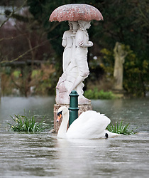 © Licensed to London News Pictures. 03/02/2021. Weybridge, UK. A swan passes an ornament in the garden of a property in Weybridge in Surrey where water levels are rising. Large parts of the UK experience more wet conditions which is expected to bring further flooding. Photo credit: Ben Cawthra/LNP