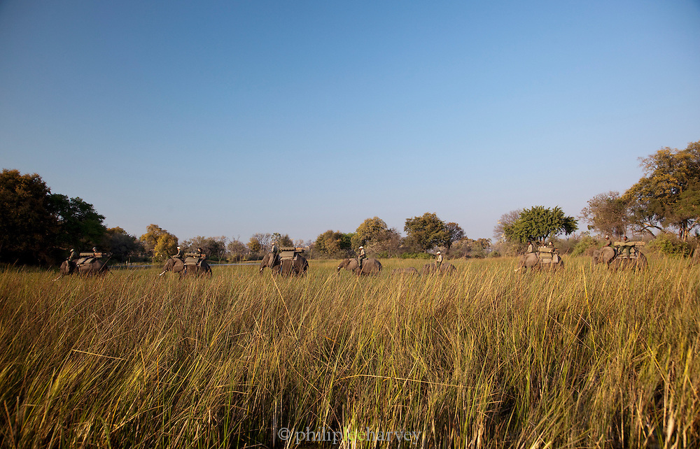 Elephant backed safari is popular in the Okavango Delta, Botswana. This enables tourists to move freely and get up close to various african wildlife.