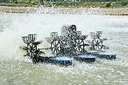 Israel, Beit Shean Valley, Kibbutz Maoz Haim Fishery, Agitating the water to oxidize.