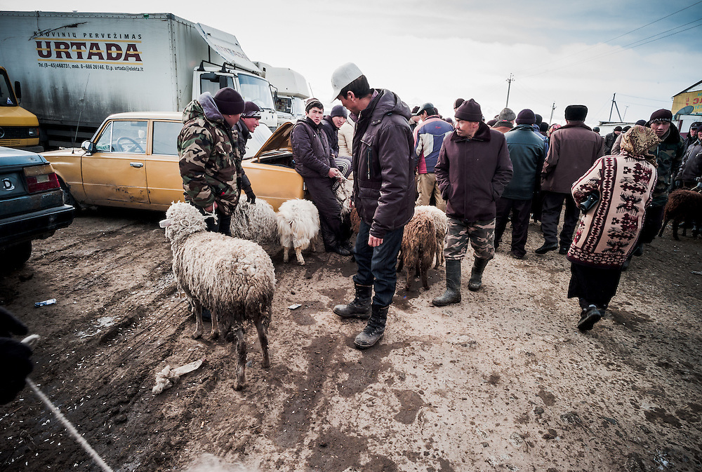 Buyers amble past private sellers that have lined up, often to sell just one family-owned sheep.