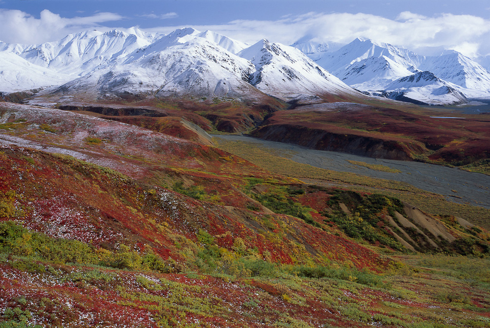 Autumn tundra design, Thorofare River, Alaska Range, Denali National Park, Alaska, USA