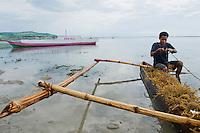 Local residents harvest seaweed near Vila, Atauro Island, Timor-Leste (East Timor)
