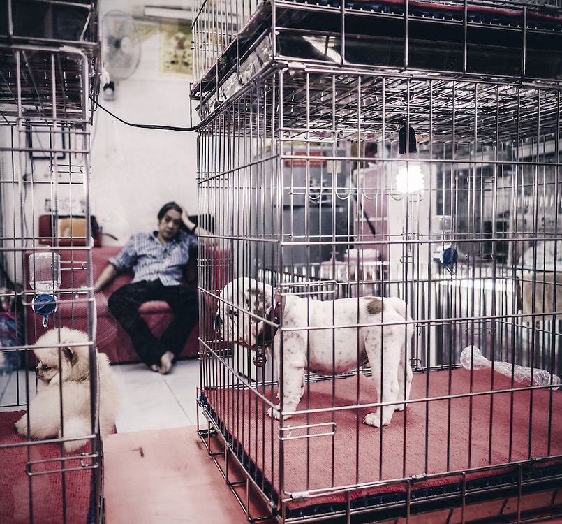 Dogs for sale inside pet shop in Chatuchak market Bangkok Thailand. This weekend market in considered the biggest in Asia with more than 8000 stalls. It has been open since 1942 and is now located near the Mo Chit skytrain station. The pet section is very big with all kind of animals for sale. <br /> <br /> Note fo inspection: Image shot from the street through the glass window of the pet shop
