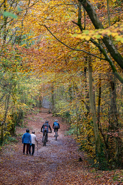© Licensed to London News Pictures 07/11/2019, Cheltenham, UK. Walkers and cyclists enjoy the good weather and  the autumn colours in the leaves of trees on Leckhampton hill, Cheltenham. Photo Credit : Stephen Shepherd/LNP