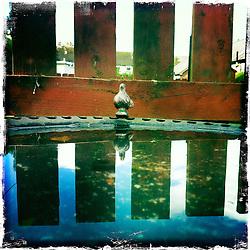 Falkirk Garden..Hipstamatic images taken on an Apple iPhone..©Michael Schofield.