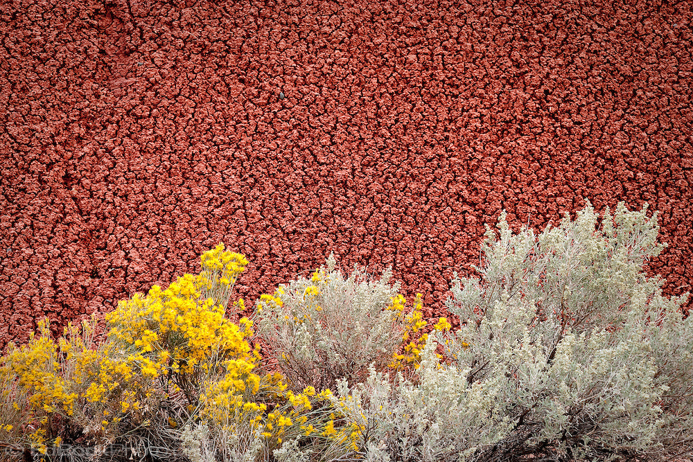 John Day Fossel Beds National Monument Painted Hills reticulated clay, Rabbitbrush, and sage, OR, USA