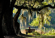 Georgetown county had numerous plantations at the start of the civl war. Gail Sullivan, of Charlottesville, Virginia, spends the early morning sketching beneath the Live Oaks at Mansfield Plantation, which was established in 1718. A slave village and chapel are on the Live Oak Alley of Mansfield Road and still remain on the plantation which today is a bed and breakfast.