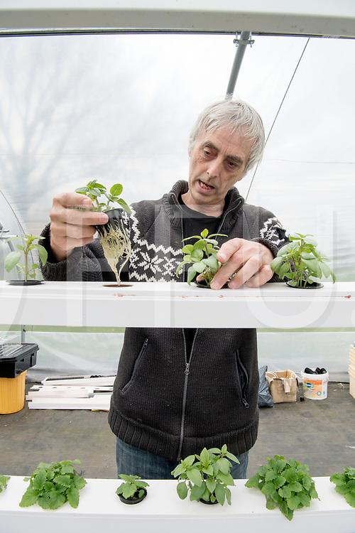 LEMELERVELD - Hydroponics.<br /> Groente kweken op water.<br /> Foto: Ed van der Post met Basilicum.<br /> FFU PRESS AGENCY COPYRIGHT Harry Kruipers