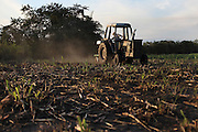 A light harrow and fertilizer implement paid with Fairtrade premium funds makes grooves and drops fertilizer pellets simultaneously on sugar cane fields. The grooves are made in order to dry up the nymphs of the Froghopper (Cercopoidea) through an environmental friendly manner without using pesticides. The Froghopper's nymph pierce sugar cane plants and suck sap, causing serious damage if uncontrolled. The increasing rains and unpredictable weather due to climate change are allowing the Froghopper's population to rise, posing serious danger to the BSCFA's producers. Belize Sugar Cane Farmers Association (BSCFA), Chen Pine Ridge, Orange Walk, Belize. January 21, 2013.