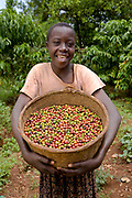 Susan Nangobi, aged 14, works with her father, a coffee farmer, when she's not at school. Susan holds a basket of freshly picked coffee beans that are ready to be dried before being taken to the Kulika centre to be sold to Ibero Coffee company. They are in the Kamuli region of Uganda. The Kulika project run Sustainable Organic Agricultural Training Programs.