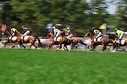 27 March 2010 : Horses charge away from the start line in the Camden Plate Maiden Hurdle race.