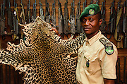 Confiscated leopard skin<br /> Mbomo African Park's Congo Headquarters<br /> Odzala - Kokoua National Park<br /> Republic of Congo (Congo - Brazzaville)<br /> AFRICA