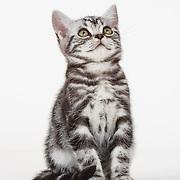 20200123 Michelle Grounding Kittens shot 2