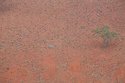 Jeceaba_MG, Brasil...Desmatamento para agricultura em Jeceaba, Minas Gerais...Desflorestation for agriculture in Jeceaba, Minas Gerais...Foto: BRUNO MAGALHAES / NITRO