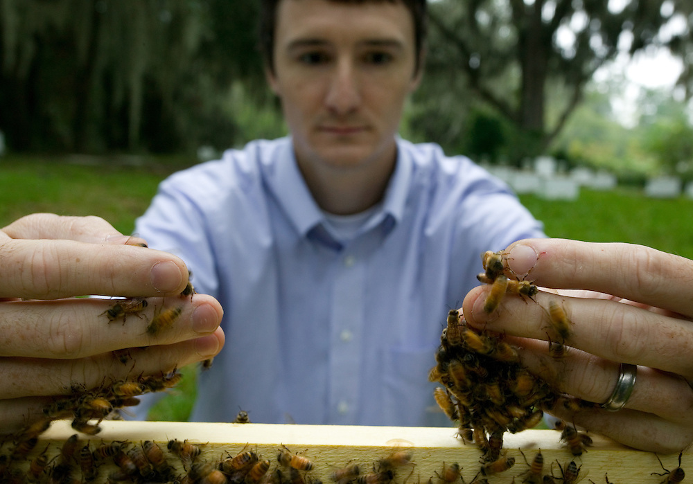 Jamie Ellis. IFAS. Glamour Shot. Joe Kays and Explore Magazine. UF. Bees. Colony Collapse Disorder (CCD). Africanization. Africanized. Honey Bee.