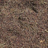 Asia, Bhutan, Bumthang. Grains of rice drying in the sun in Bhutan.