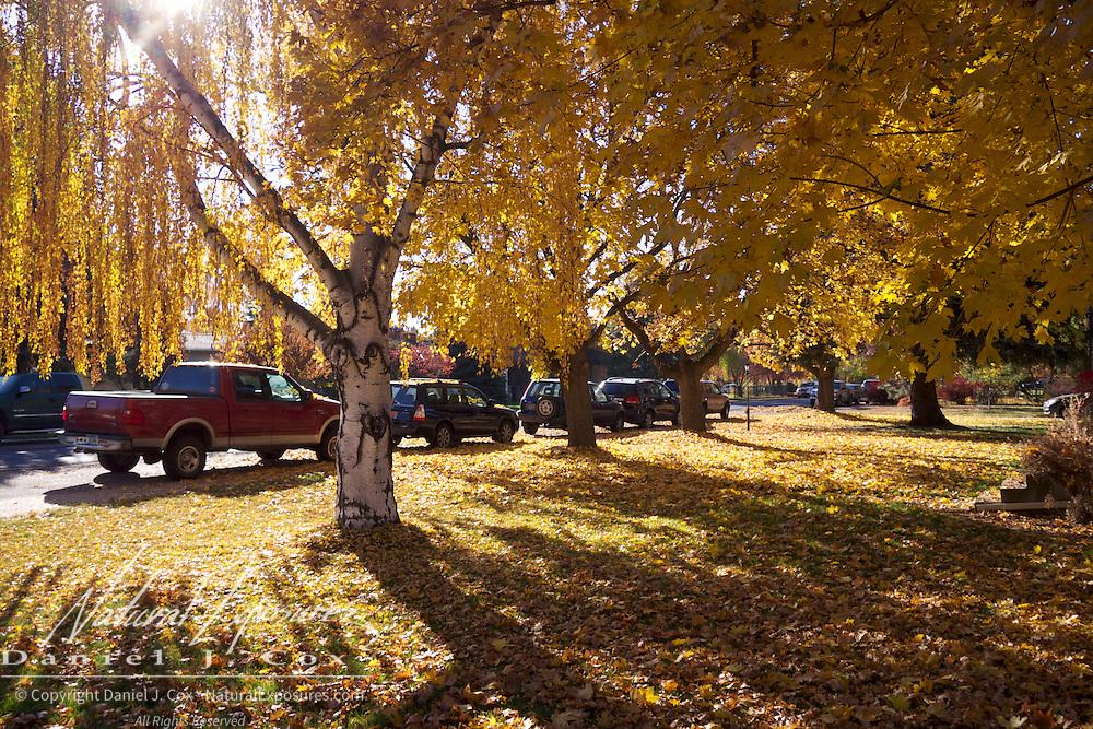 Beautiful fall colors on the streets of Missoula. Montana