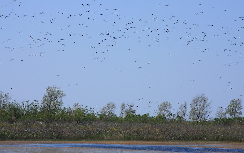 White Lake Wetlands Conservation Area, Vermilion Parish Louisiana