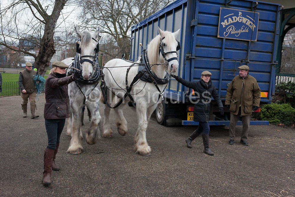 Members of Operation Centaur lead Shire horses Nobby and Heath before they harrow an on-going heritage wheat-growing area in Ruskin Park, a public green space in the borough of Southwark, on 9th February 2018, in London, England. The Friends of Ruskin Park are again growing heritage wheat and crops together with the Friends of Brixton Windmill and Brockwell Bake Association. Shire horses are descended from themedievalwarhorse but are a breed under threat. Operation Centaur, which maintains the last working herd of Shires in London is dedicated to the protection and survival of the breed. It is an organization set up to promote the relevance of the horse as a contemporary working animal in partnership with humans. This takes the form of heritage skills in conservation and agriculture, transportation, discovery, learning and therapy.