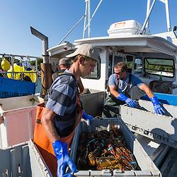 Sternmen Austin Jones (left) and Captain Ivan Bly sorting lobsters aboard his boat 'Iris-Irene,' at the Tenants Harbor Fisherman's Coop in Tenants Harbor, Maine.