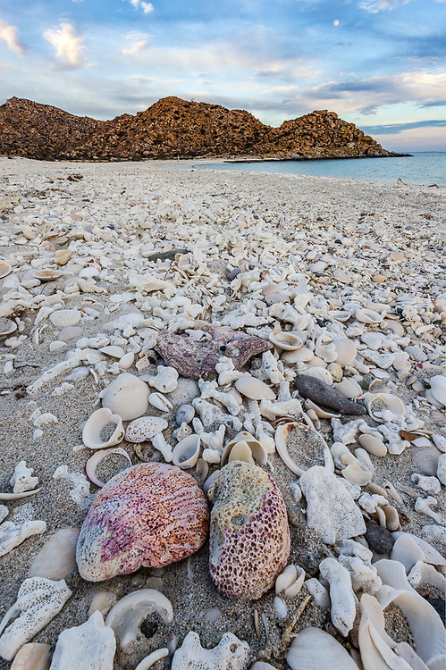 Isla Espirtu Santo, Espirtu Santo Marine Park, Sea of Cortez, February, Baja, Mexico