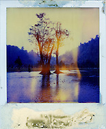 Roots of two old tree are flooded by water. A yellow trace appears on the outdated polaroid. Looks like a sunshine between branches
