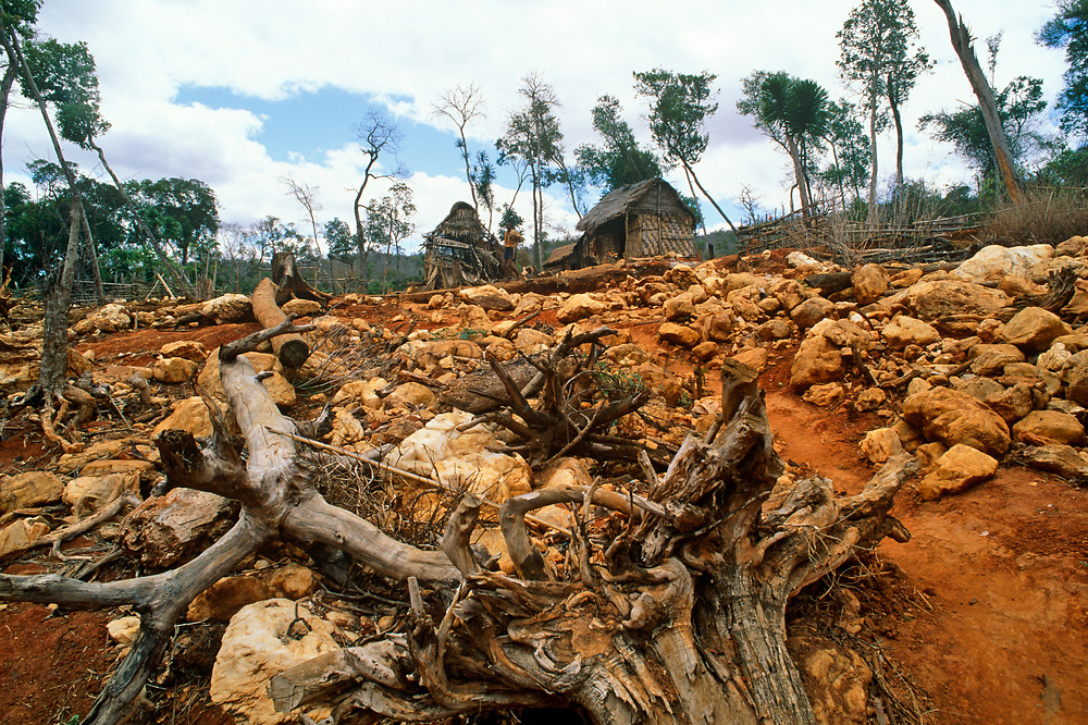 Erosion caused by gold mining, in forest encroaching on refuge of Golden crowned sifaka, Madagascar