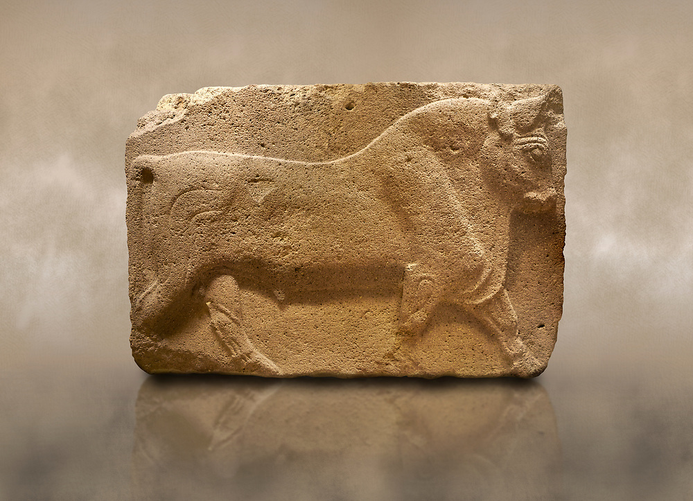 Photo of Phrygian relief sculpted orthostat stone panel, 1200-700 B.C. Anatolian Civilisations Museum, Ankara, Turkey. Figure of a walking bull. <br /> <br /> Against a brown art background. .<br /> <br /> If you prefer you can also buy from our ALAMY PHOTO LIBRARY  Collection visit : https://www.alamy.com/portfolio/paul-williams-funkystock/phrygian-antiquities.html  - Type into the LOWER SEARCH WITHIN GALLERY box to refine search by adding background colour, place, museum etc<br /> <br /> Visit our CLASSICAL WORLD PHOTO COLLECTIONS for more photos to download or buy as wall art prints https://funkystock.photoshelter.com/gallery-collection/Classical-Era-Historic-Sites-Archaeological-Sites-Pictures-Images/C0000g4bSGiDL9rw