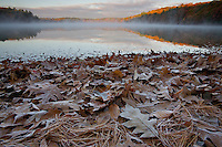 """""""Frosty Fall Sunrise"""".A frosty fall sunrise at Walden Pond.  Frost coats the oak leaves and pine needles on the shoreline.  Autumn views at Walden Pond."""