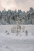 Island with few scots pines (Pinus sylvestris). Silent morning over frozen nameless lake and surrounding forests on snowy winter day in Vidzeme, near Nītaure, Vidzeme, Latvia Ⓒ Davis Ulands | davisulands.com