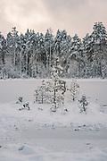 Island with few scots pines (Pinus sylvestris). Silent morning over frozen nameless lake and surrounding forests on snowy winter day in Vidzeme, near Nītaure, Vidzeme, Latvia Ⓒ Davis Ulands | davisulands.com