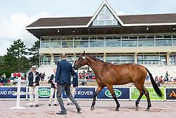 Sydney Collier, (USA), Willi Wesley, - Horse Inspection Para Dressage - Alltech FEI World Equestrian Games™ 2014 - Normandy, France.<br /> © Hippo Foto Team - Jon Stroud<br /> 25/06/14