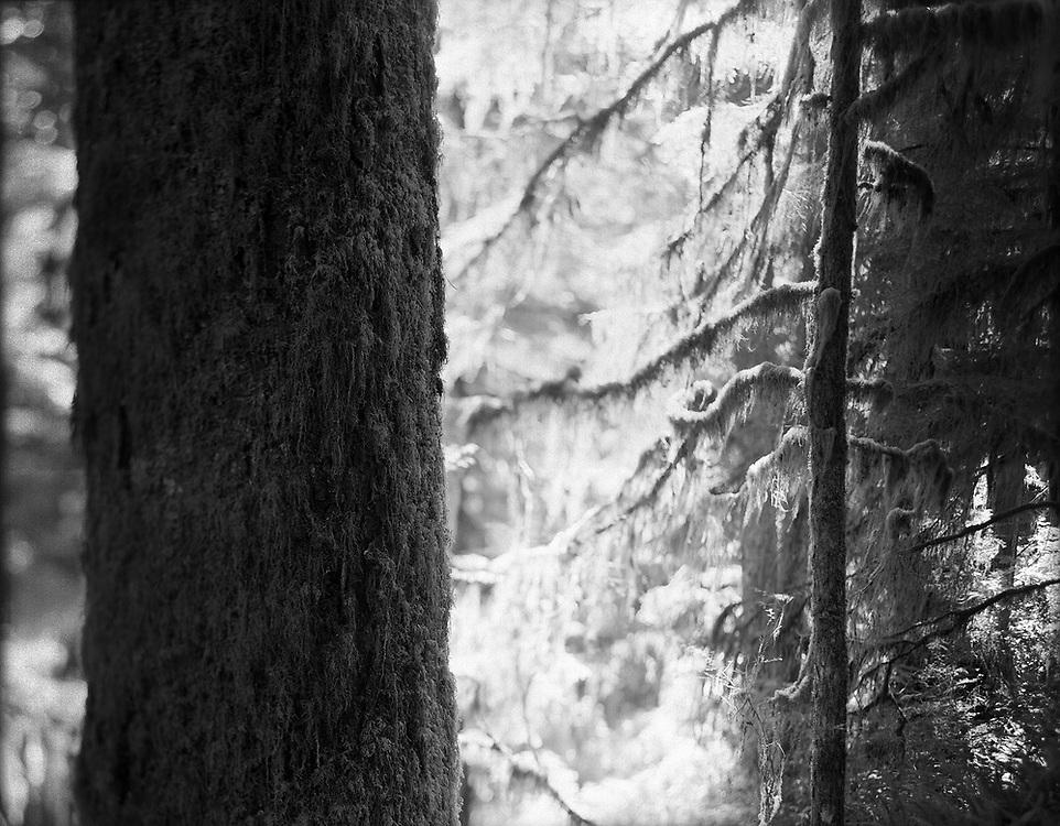 Tofino Rain Forest, BC